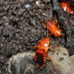 Туркменские тараканы