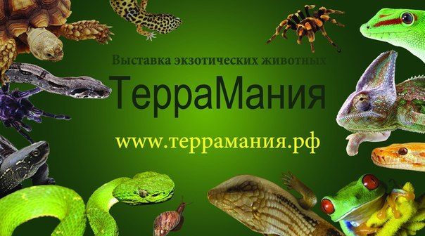 Террамания