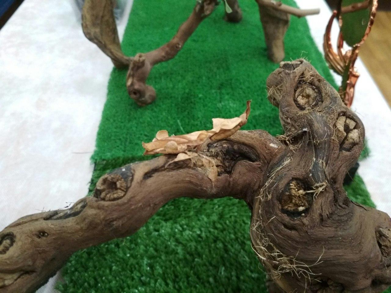 Богомол-призрак на коряге