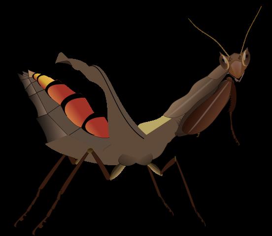 Acanthops falcata самка