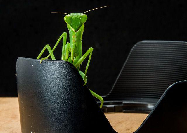 История содержания насекомых