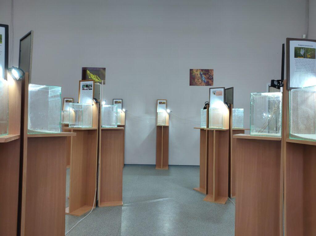 Выставка «Богомолы: ожившие цветы» в Барнауле
