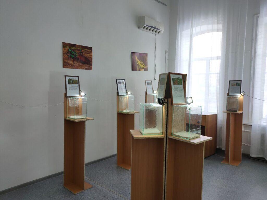 Выставка «Богомолы: ожившие цветы» в Бийске
